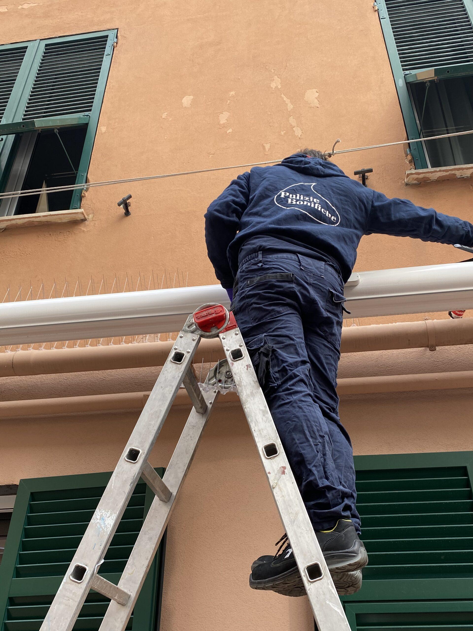 Allontanamento volatili Genova